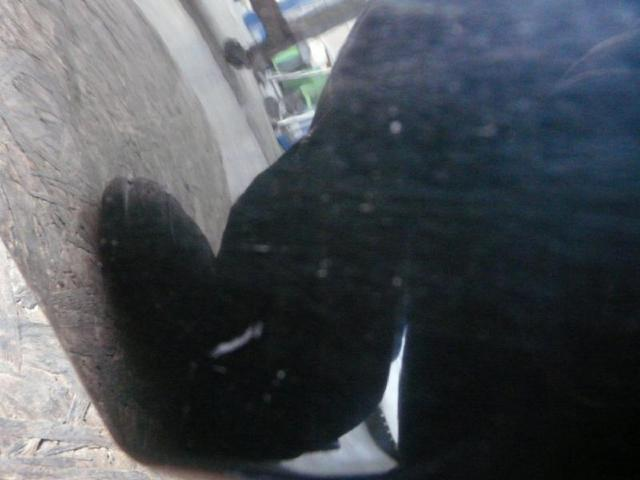 Kotfluegel links w168 fc:696 Bild