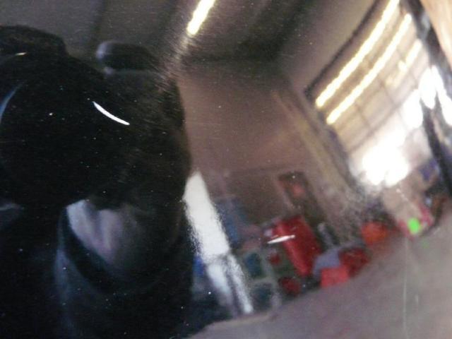 Kotfluegel rechts w168 fc:696 Bild